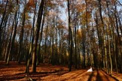 Plener ślubny w lesie magiczny klimat w Hermanowej
